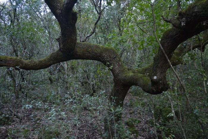 Árbol caprichoso