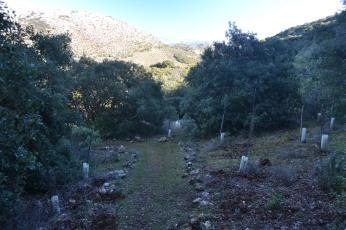 Camino repoblado de plantas