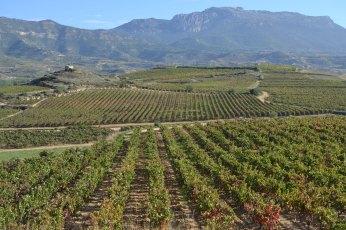 Santuario Celtíbero rodeado de viñas