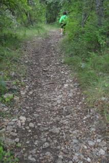 Camino hacia el bosque