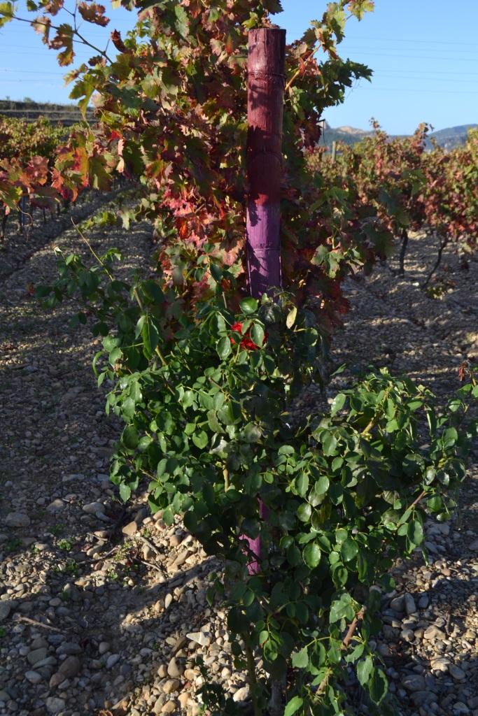 Flores en el viñedo