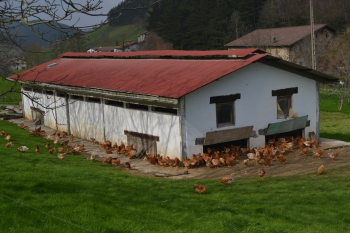 Granja de gallinas Lumagorri