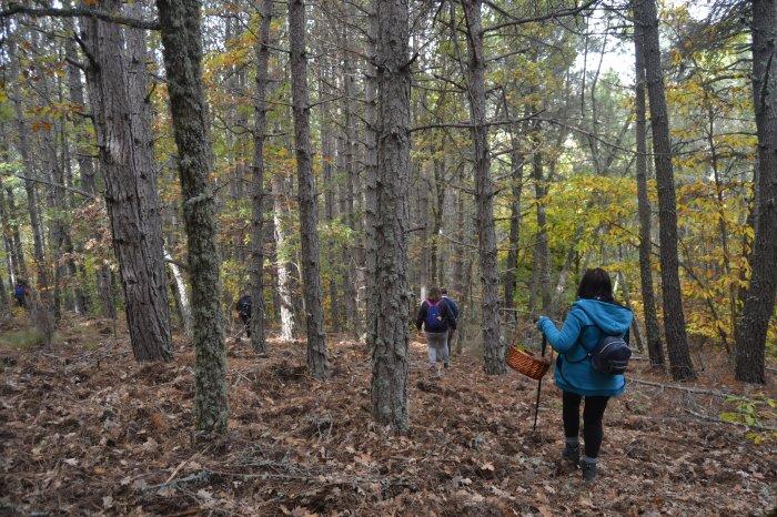 Buscando setas en el bosque