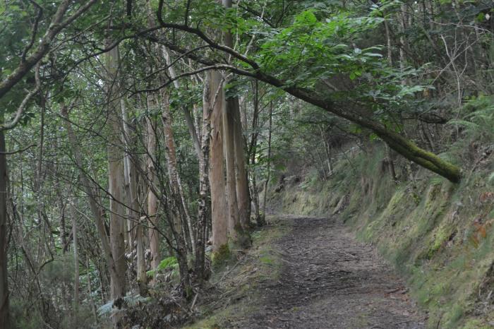 Camino hacia El Cabañon