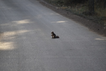 Ardilla en la carretera