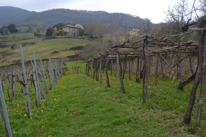 Palacio Elexpuru desde los viñedos de Zabala Txakolina