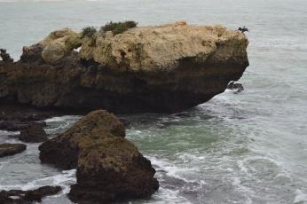 Pájaro sobre las rocas