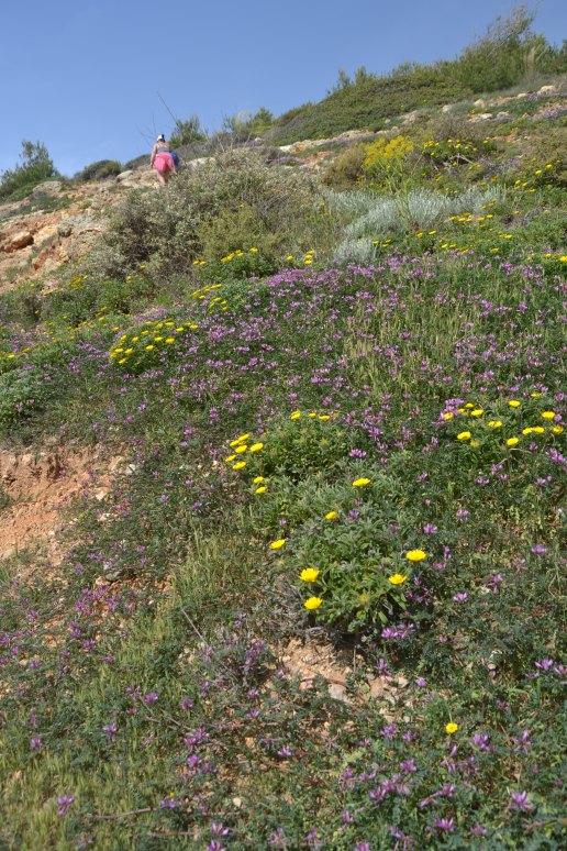 Sendero entre flores